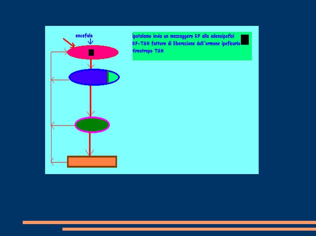 Lo scivolamento retinico è la differenza fra la velocità dellocchio e la velocità di uno stimolo in movimento (o stazionario).
