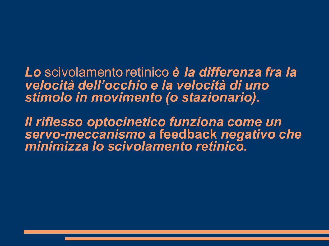 Lo scivolamento retinico è la differenza fra la velocità dellocchio e la velocità di uno stimolo in movimento (o stazionario). Il riflesso optocinetic