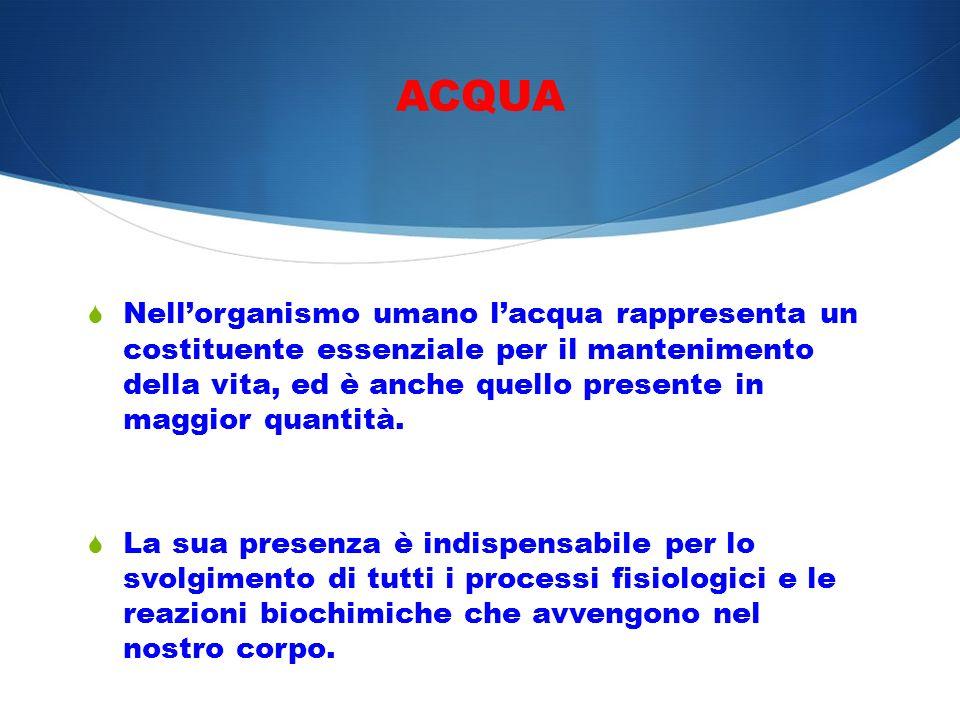 ACQUA Nellorganismo umano lacqua rappresenta un costituente essenziale per il mantenimento della vita, ed è anche quello presente in maggior quantità.