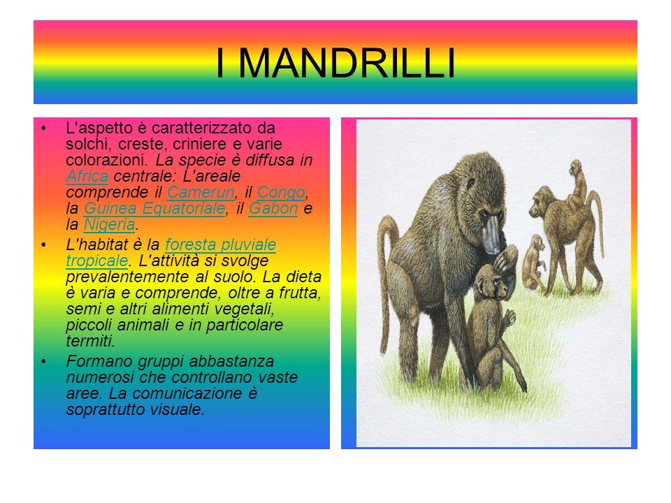I MANDRILLI L'aspetto è caratterizzato da solchi, creste, criniere e varie colorazioni. La specie è diffusa in Africa centrale: L'areale comprende il