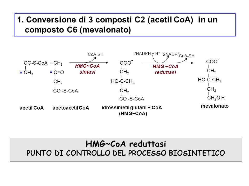 1. Conversione di 3 composti C2 (acetil CoA) in un composto C6 (mevalonato) HMG~CoA reduttasi PUNTO DI CONTROLLO DEL PROCESSO BIOSINTETICO CO-S-CoA +