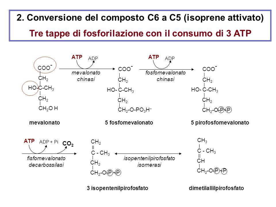 2. Conversione del composto C6 a C5 (isoprene attivato) Tre tappe di fosforilazione con il consumo di 3 ATP 3 isopentenilpirofosfato dimetilallilpirof