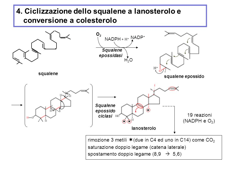 4. Ciclizzazione dello squalene a lanosterolo e conversione a colesterolo rimozione 3 metili (due in C4 ed uno in C14) come CO 2 saturazione doppio le