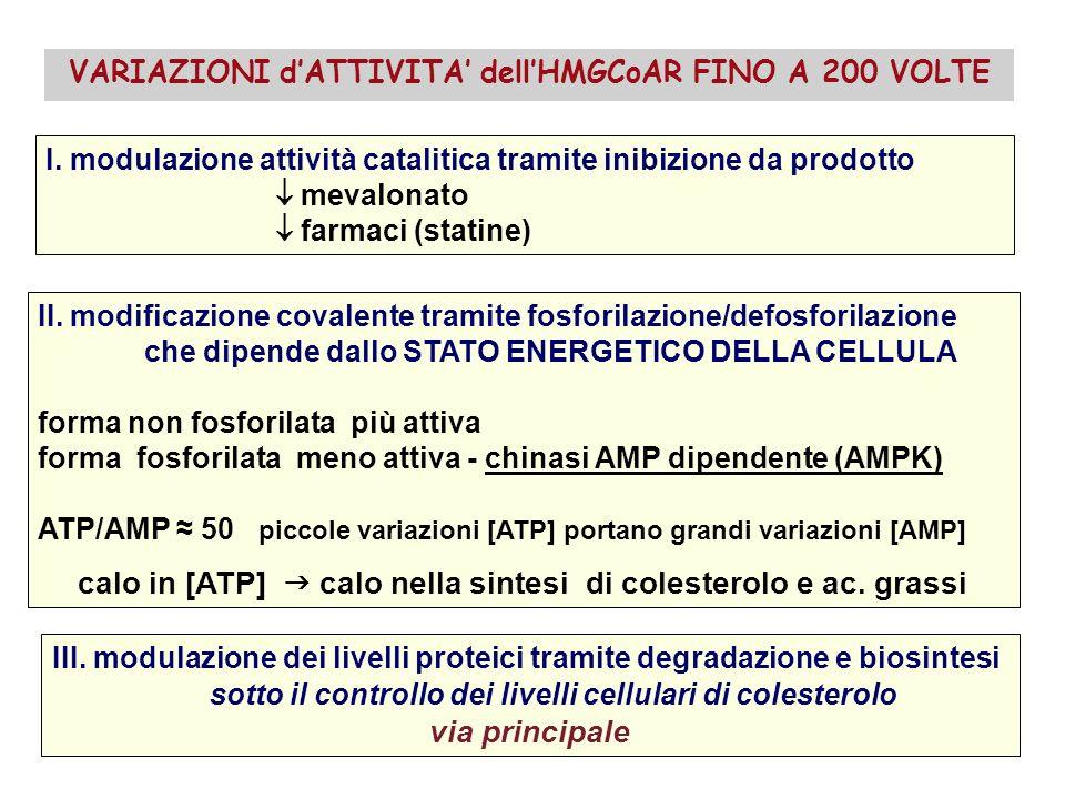 I.modulazione attività catalitica tramite inibizione da prodotto mevalonato farmaci (statine) II.