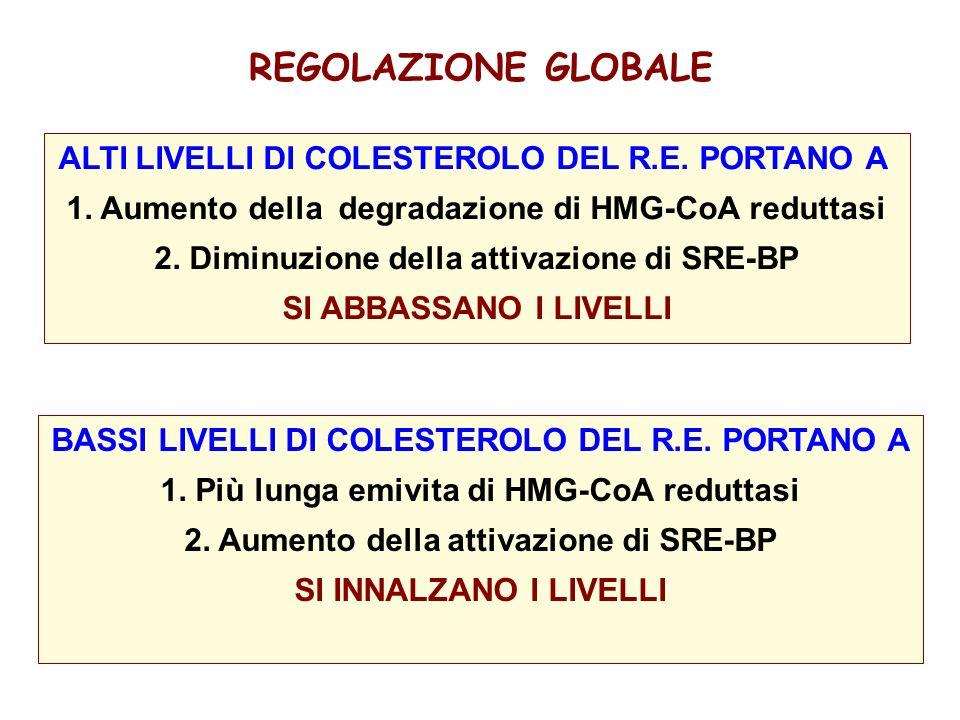 REGOLAZIONE GLOBALE ALTI LIVELLI DI COLESTEROLO DEL R.E.