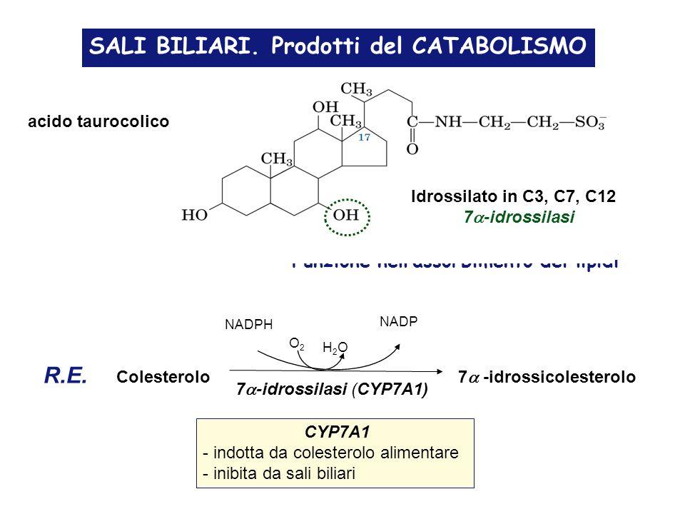 SALI BILIARI.Prodotti del CATABOLISMO acido taurocolico Funzione nellassorbimento dei lipidi R.E.