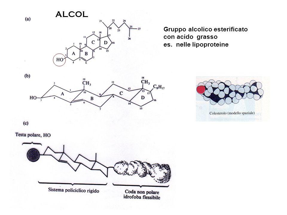 Gruppo alcolico esterificato con acido grasso es. nelle lipoproteine ALCOL
