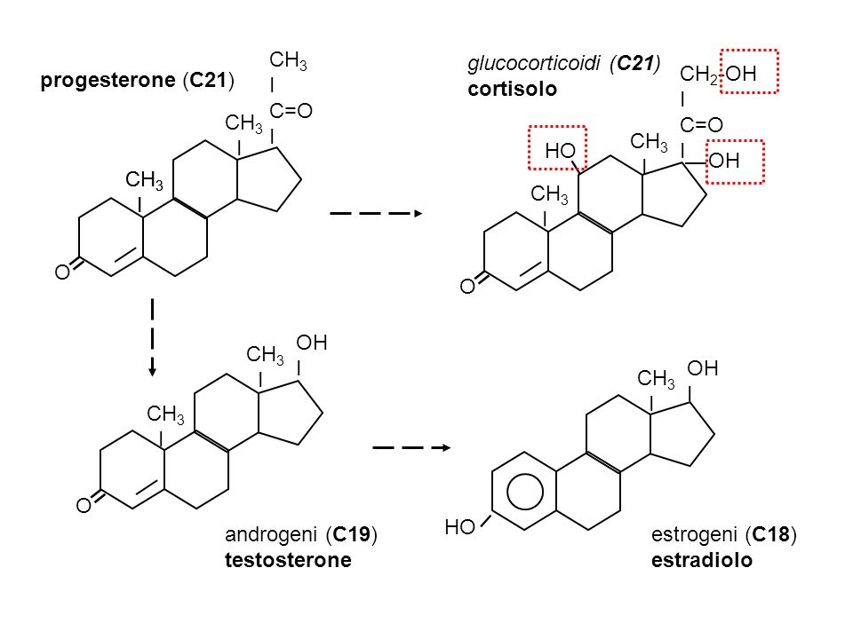 O CH 3 I CH 3 I C=O I = O OH I = HO OH I I progesterone (C21) glucocorticoidi (C21) cortisolo androgeni (C19) testosterone estrogeni (C18) estradiolo O CH 2 -OH I C=O I = OH I HO CH 3 I CH 3 I CH 3 I CH 3 I CH 3 I CH 3 I CH 3 I