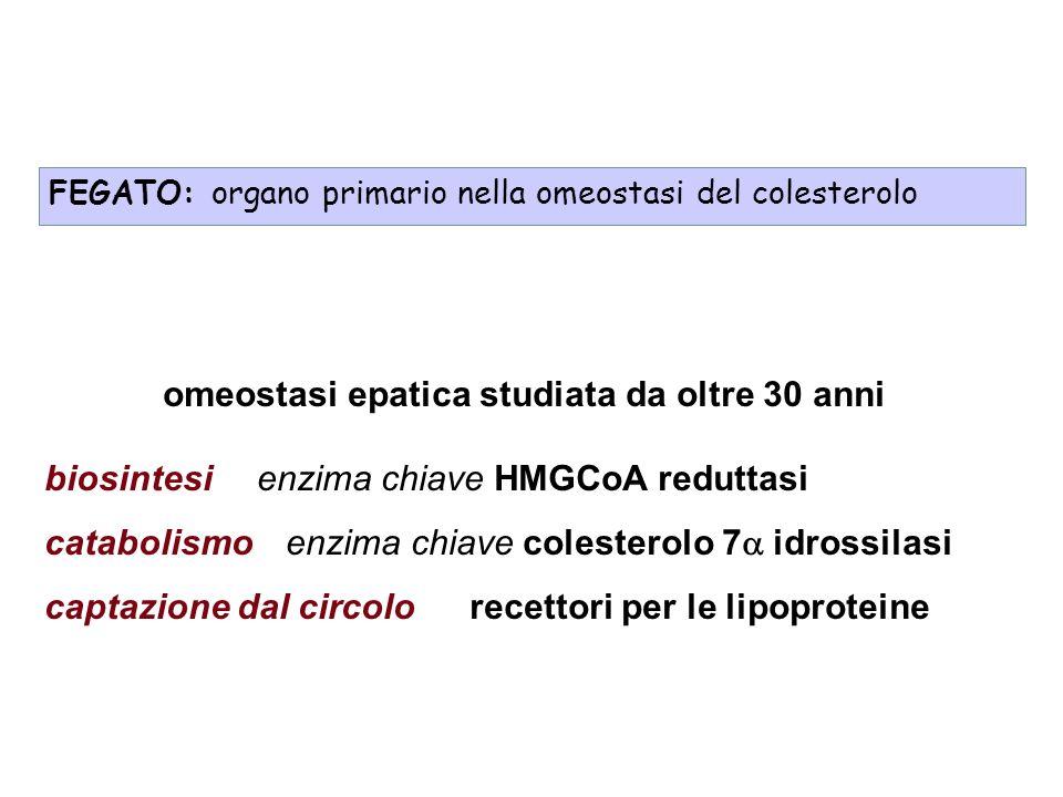 omeostasi epatica studiata da oltre 30 anni biosintesienzima chiave HMGCoA reduttasi catabolismo enzima chiave colesterolo 7 idrossilasi captazione dal circolorecettori per le lipoproteine FEGATO: organo primario nella omeostasi del colesterolo