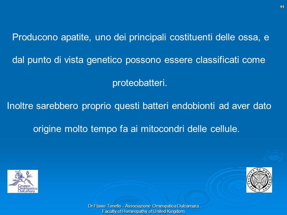 Dr Flavio Tonello - Associazione Omeopatica Dulcamara Faculty of Homeopathy of United Kingdom Producono apatite, uno dei principali costituenti delle