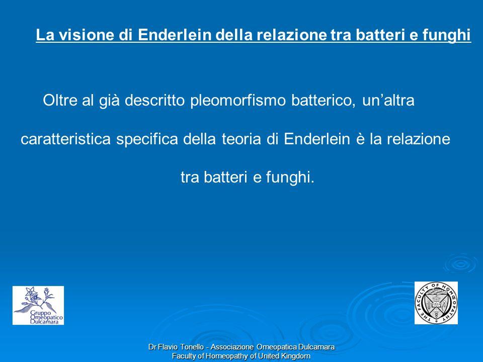 Dr Flavio Tonello - Associazione Omeopatica Dulcamara Faculty of Homeopathy of United Kingdom La visione di Enderlein della relazione tra batteri e fu