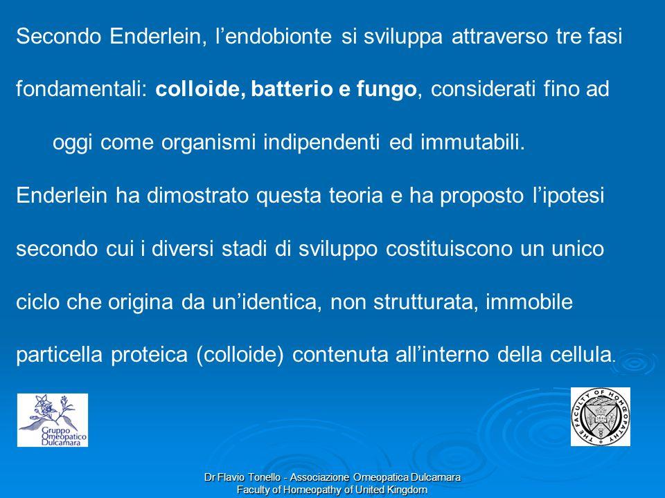 Dr Flavio Tonello - Associazione Omeopatica Dulcamara Faculty of Homeopathy of United Kingdom Secondo Enderlein, lendobionte si sviluppa attraverso tr