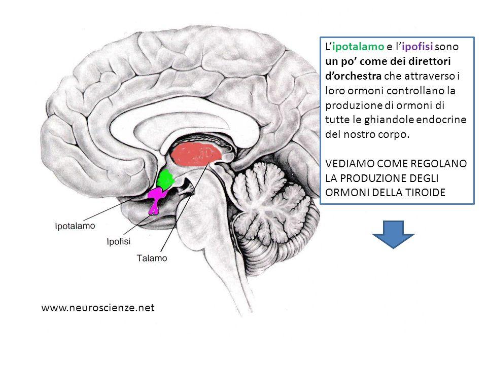 NELLA SITUAZIONE NORMALE /FISIOLOGICA ….