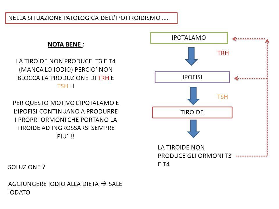 NELLA SITUAZIONE PATOLOGICA DELLIPOTIROIDISMO …. IPOTALAMO TRH IPOFISI TIROIDE TSH LA TIROIDE NON PRODUCE GLI ORMONI T3 E T4 NOTA BENE NOTA BENE : LA