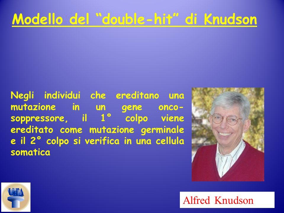 Alfred Knudson Negli individui che ereditano una mutazione in un gene onco- soppressore, il 1° colpo viene ereditato come mutazione germinale e il 2°