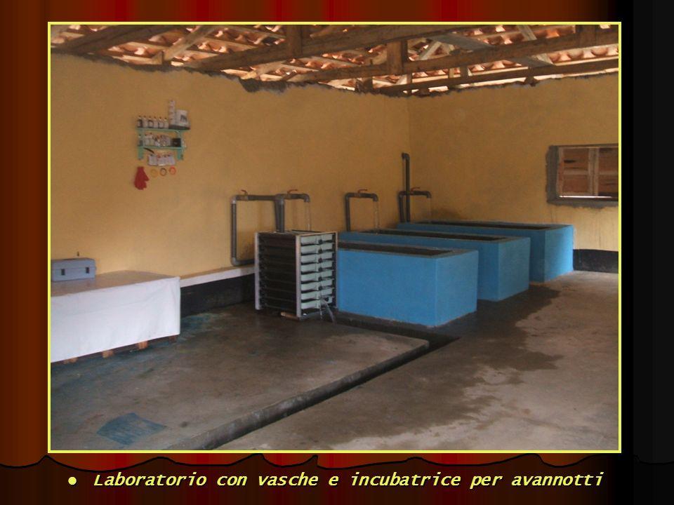 Laboratorio con vasche e incubatrice per avannotti Laboratorio con vasche e incubatrice per avannotti