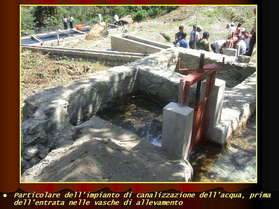 Particolare dellimpianto di canalizzazione dellacqua, prima dellentrata nelle vasche di allevamento Particolare dellimpianto di canalizzazione dellacq