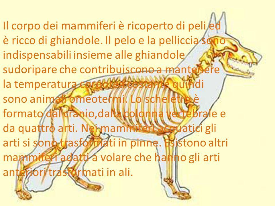 Il corpo dei mammiferi è ricoperto di peli ed è ricco di ghiandole.