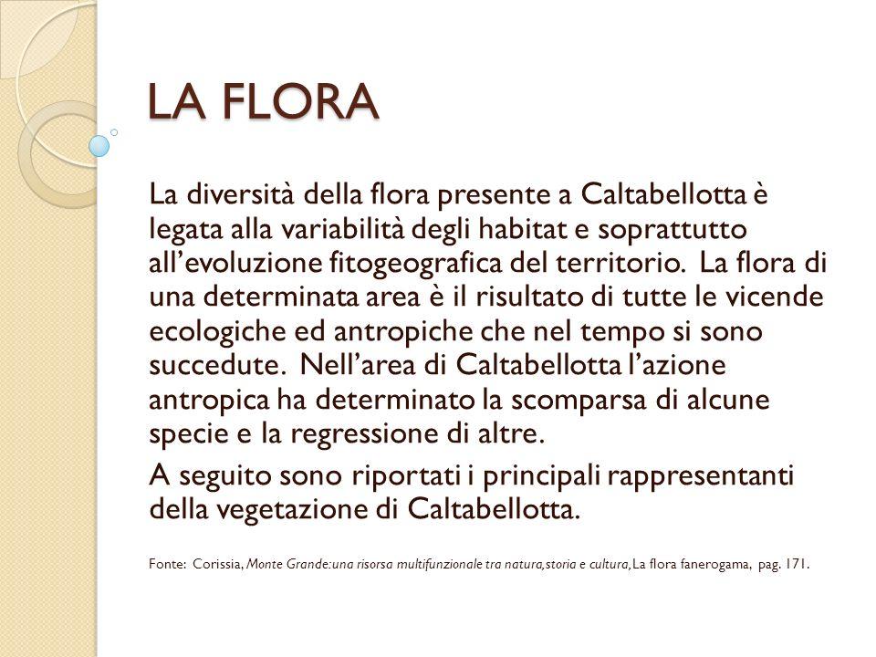 LA FLORA La diversità della flora presente a Caltabellotta è legata alla variabilità degli habitat e soprattutto allevoluzione fitogeografica del terr