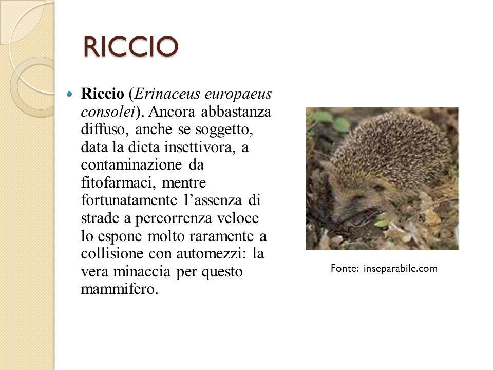 RICCIO Riccio (Erinaceus europaeus consolei). Ancora abbastanza diffuso, anche se soggetto, data la dieta insettivora, a contaminazione da fitofarmaci