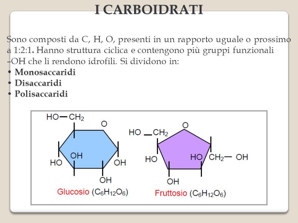 Sono composti da C, H, O, presenti in un rapporto uguale o prossimo a 1:2:1. Hanno struttura ciclica e contengono più gruppi funzionali –OH che li ren