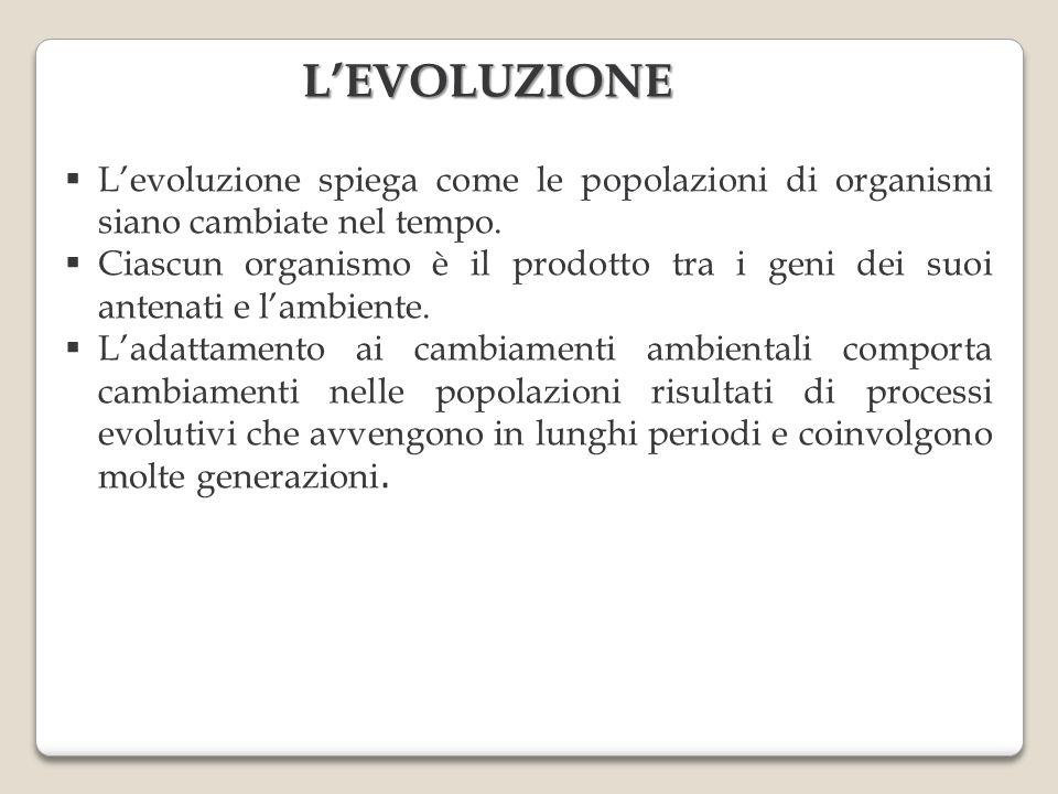 Levoluzione spiega come le popolazioni di organismi siano cambiate nel tempo. Ciascun organismo è il prodotto tra i geni dei suoi antenati e lambiente