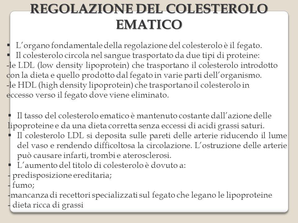 Lorgano fondamentale della regolazione del colesterolo è il fegato. Il colesterolo circola nel sangue trasportato da due tipi di proteine: -le LDL (lo