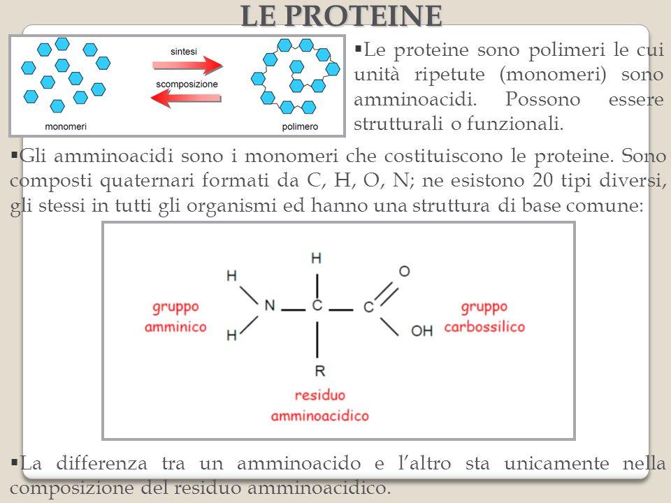Le proteine sono polimeri le cui unità ripetute (monomeri) sono amminoacidi. Possono essere strutturali o funzionali. LE PROTEINE Gli amminoacidi sono