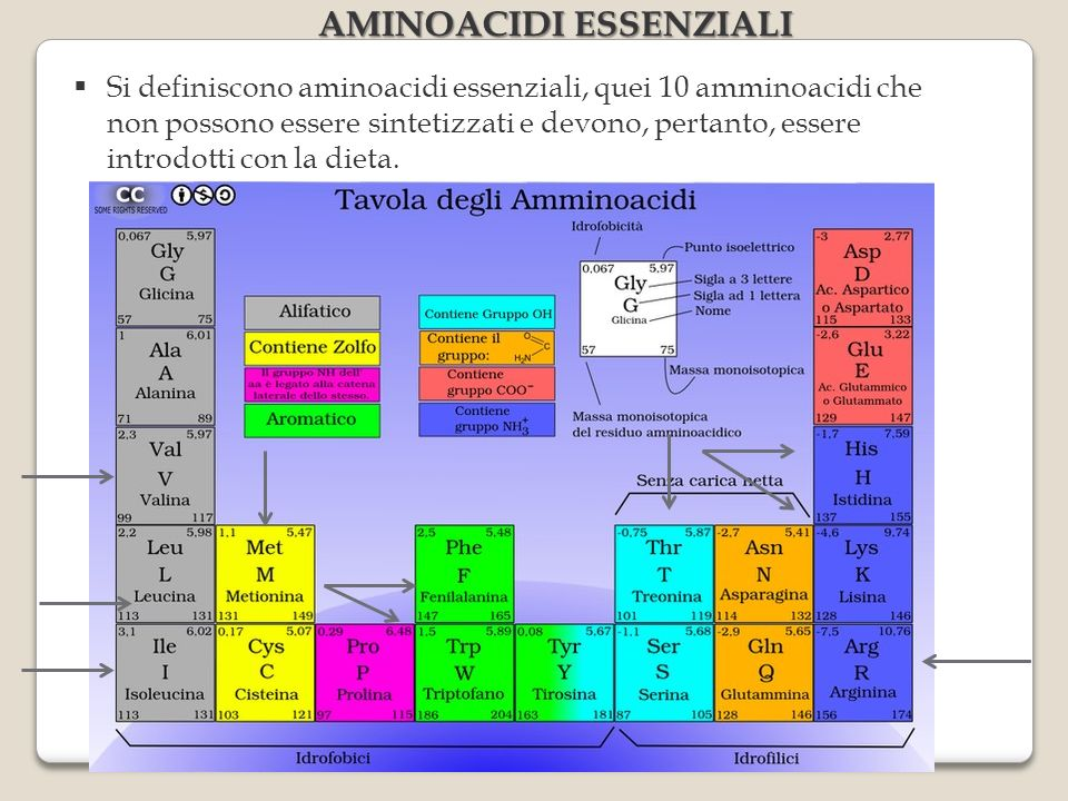 AMINOACIDI ESSENZIALI Si definiscono aminoacidi essenziali, quei 10 amminoacidi che non possono essere sintetizzati e devono, pertanto, essere introdotti con la dieta.