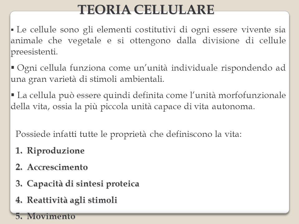 TEORIA CELLULARE Le cellule sono gli elementi costitutivi di ogni essere vivente sia animale che vegetale e si ottengono dalla divisione di cellule preesistenti.