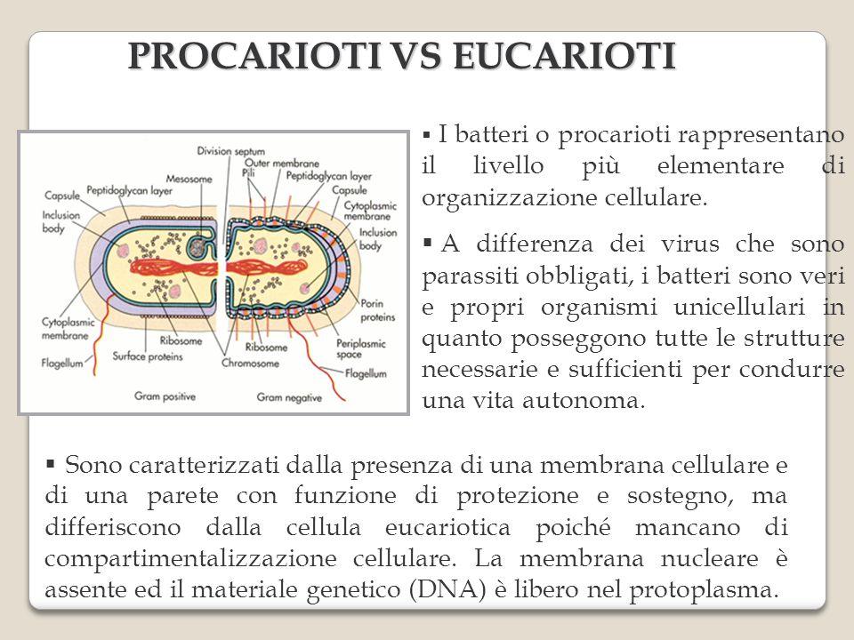 PROCARIOTI VS EUCARIOTI I batteri o procarioti rappresentano il livello più elementare di organizzazione cellulare. A differenza dei virus che sono pa