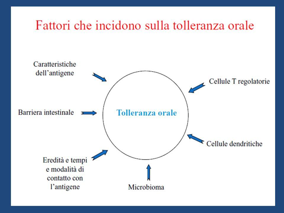 NOVITA IN TOLLERANZA IMMUNOLOGICA E APPARATO GASTRO-ENTERICO: NEL QUOTIDIANO Importanza della barriera intestinale Diete di esclusione in gravidanza e allattamento Timing Svezzamento Diete nella Dermatite Atopica Probiotici e Tolleranza SOTI