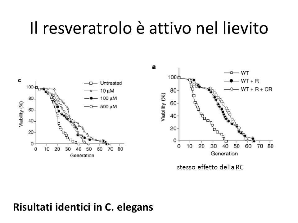 Il resveratrolo è attivo nel lievito stesso effetto della RC Risultati identici in C. elegans