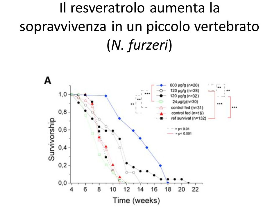 Il resveratrolo aumenta la sopravvivenza in un piccolo vertebrato (N. furzeri)