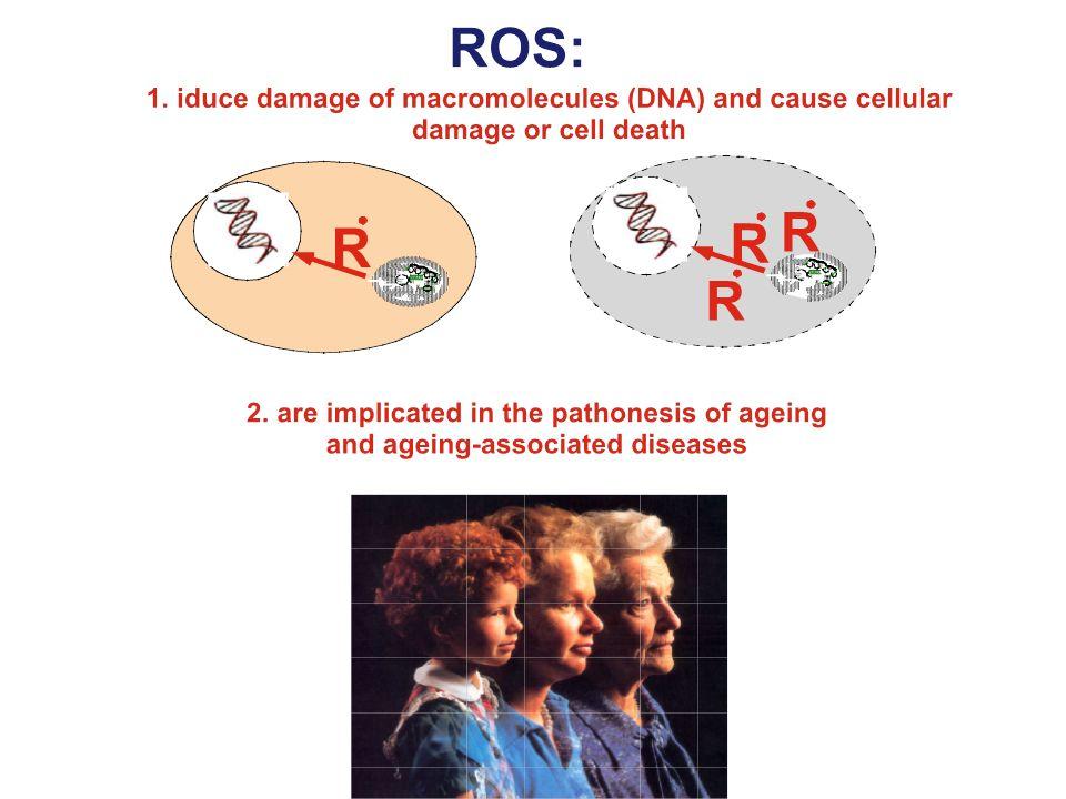 p66Shc Un circuito di segnalazione presente nei mammiferi che collega lattivitá di p53 alla produzione di ROS ed allinvecchiamento