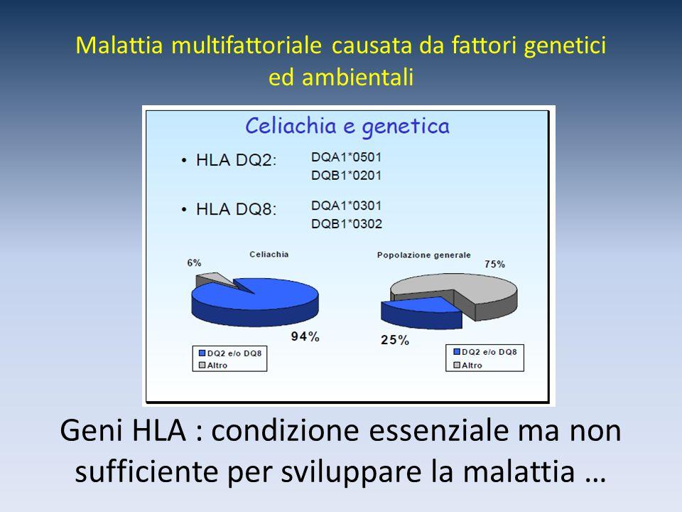 Geni HLA : condizione essenziale ma non sufficiente per sviluppare la malattia … Malattia multifattoriale causata da fattori genetici ed ambientali