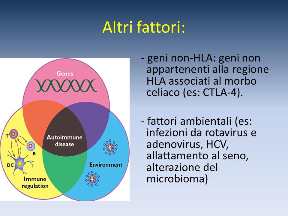 Altri fattori: - geni non-HLA: geni non appartenenti alla regione HLA associati al morbo celiaco (es: CTLA-4). - fattori ambientali (es: infezioni da