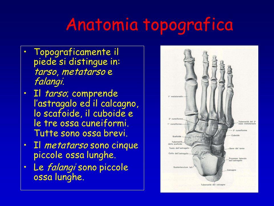 Anatomia topografica Topograficamente il piede si distingue in: tarso, metatarso e falangi. Il tarso; comprende lastragalo ed il calcagno, lo scafoide