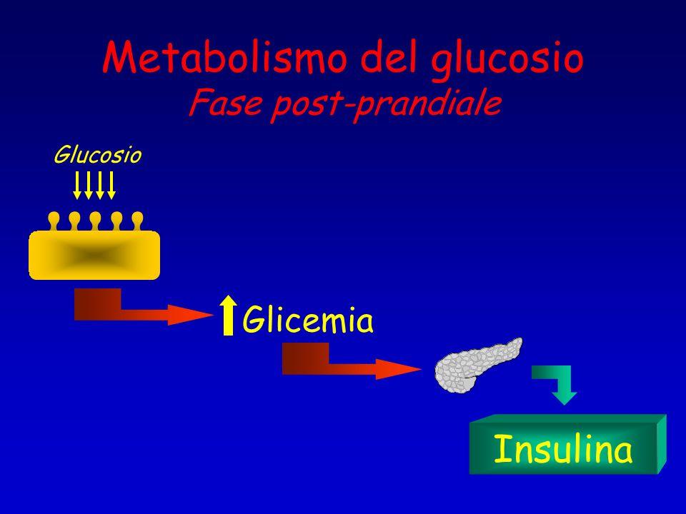 Metabolismo del glucosio Fase post-prandiale Glucosio Glicemia Insulina