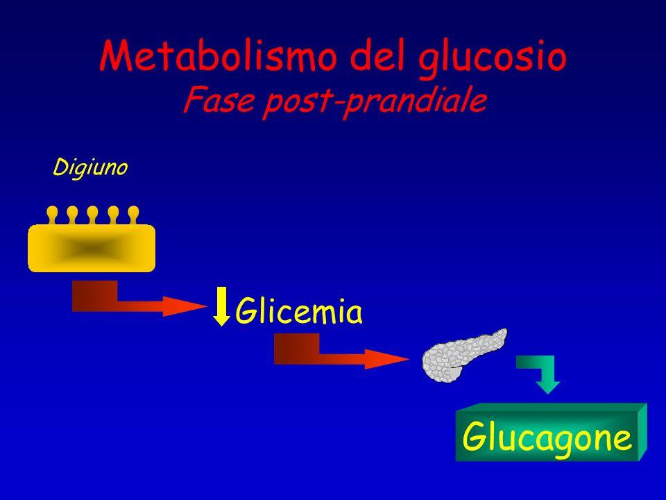 Metabolismo del glucosio Fase post-prandiale Digiuno Glicemia Glucagone