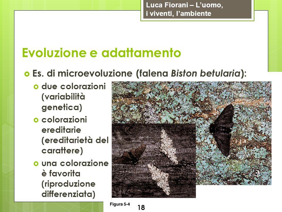 Luca Fiorani – Luomo, i viventi, lambiente Evoluzione e adattamento 18 Es. di microevoluzione (falena Biston betularia ): due colorazioni (variabilità