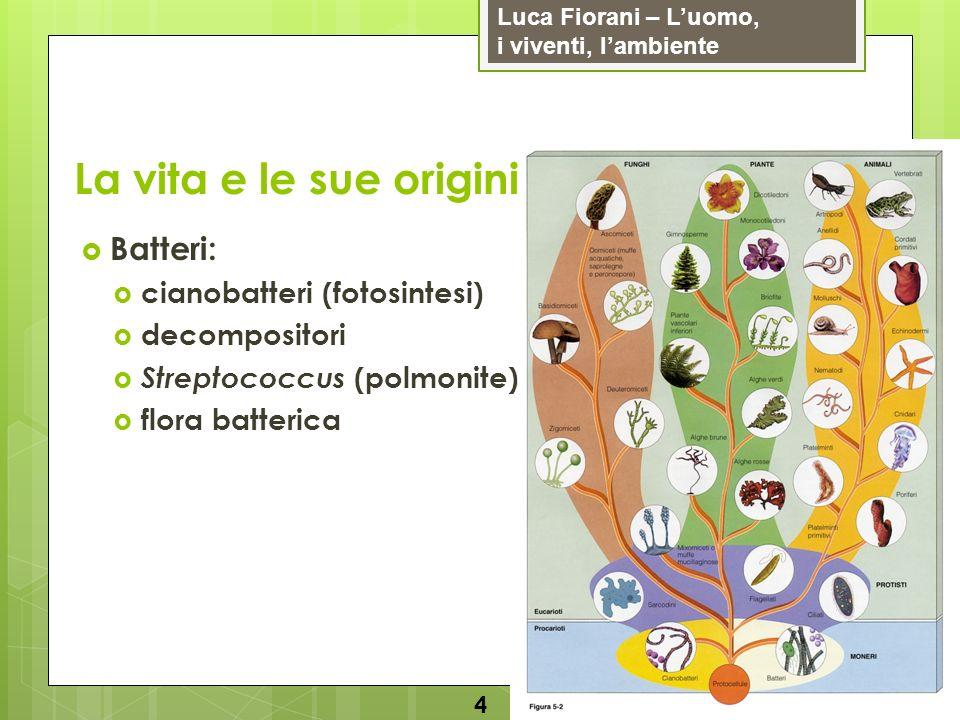 Luca Fiorani – Luomo, i viventi, lambiente La vita e le sue origini 5 Protisti: flagellati parameci diatomee (fotosintesi) alcune alghe detritivori e parassiti amebe (amebiasi) plasmodio (malaria) tripanosoma (malattia del sonno)