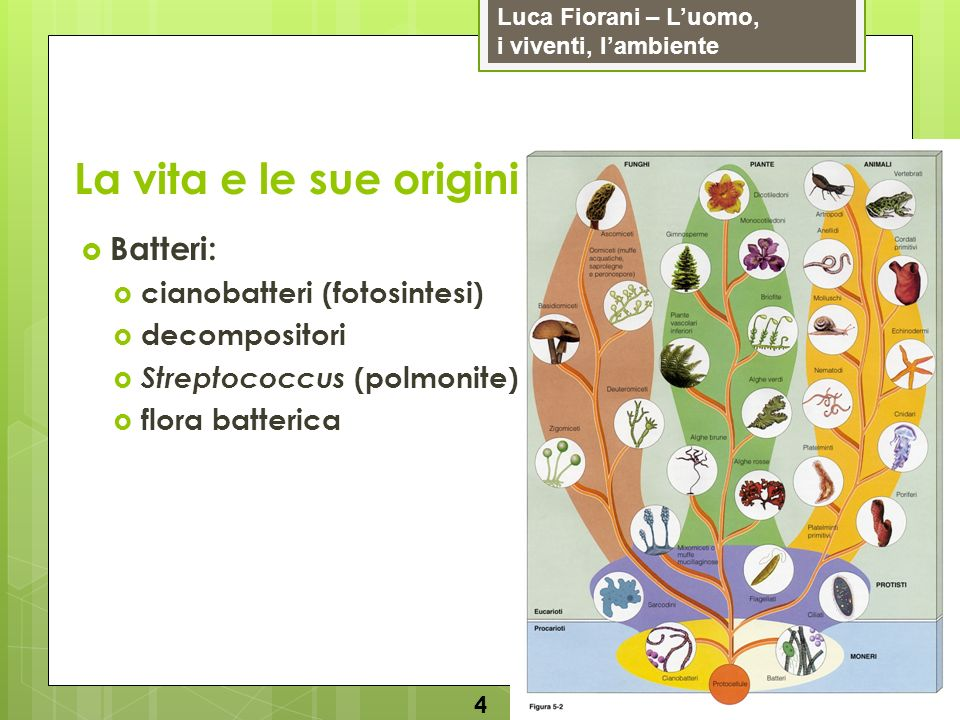 Luca Fiorani – Luomo, i viventi, lambiente La vita e le sue origini 4 Batteri: cianobatteri (fotosintesi) decompositori Streptococcus (polmonite) flor