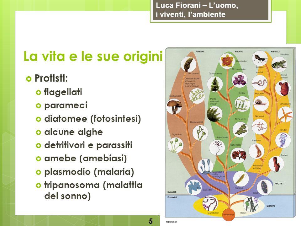 Luca Fiorani – Luomo, i viventi, lambiente La vita e le sue origini 5 Protisti: flagellati parameci diatomee (fotosintesi) alcune alghe detritivori e