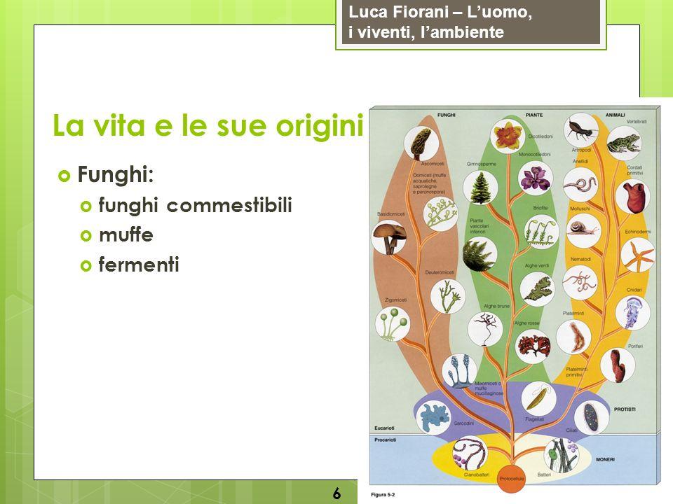 Luca Fiorani – Luomo, i viventi, lambiente La vita e le sue origini 7 Piante: pluricellulari e in genere fotosintetiche muschi felci conifere (gimnosperme) fiori (angiosperme) annue/perenni