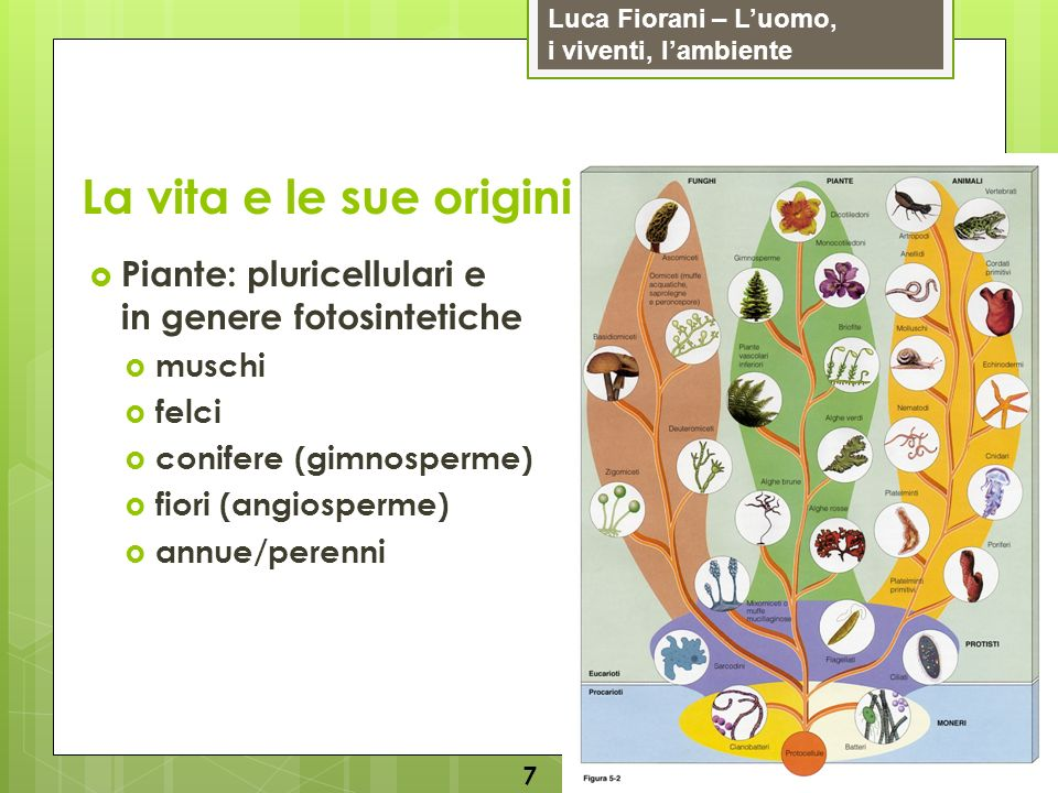 Luca Fiorani – Luomo, i viventi, lambiente La vita e le sue origini 8 Animali: pluricellulari e non fotosintetici vertebrati: mammiferi, uccelli, rettili, anfibi, pesci invertebrati: spugne, meduse, polipi, planarie, vermi, artropodi (insetti, millepiedi, gamberi, ragni), molluschi (lumache, vongole, polpi, calamari), echinodermi (ricci di mare e stelle marine)