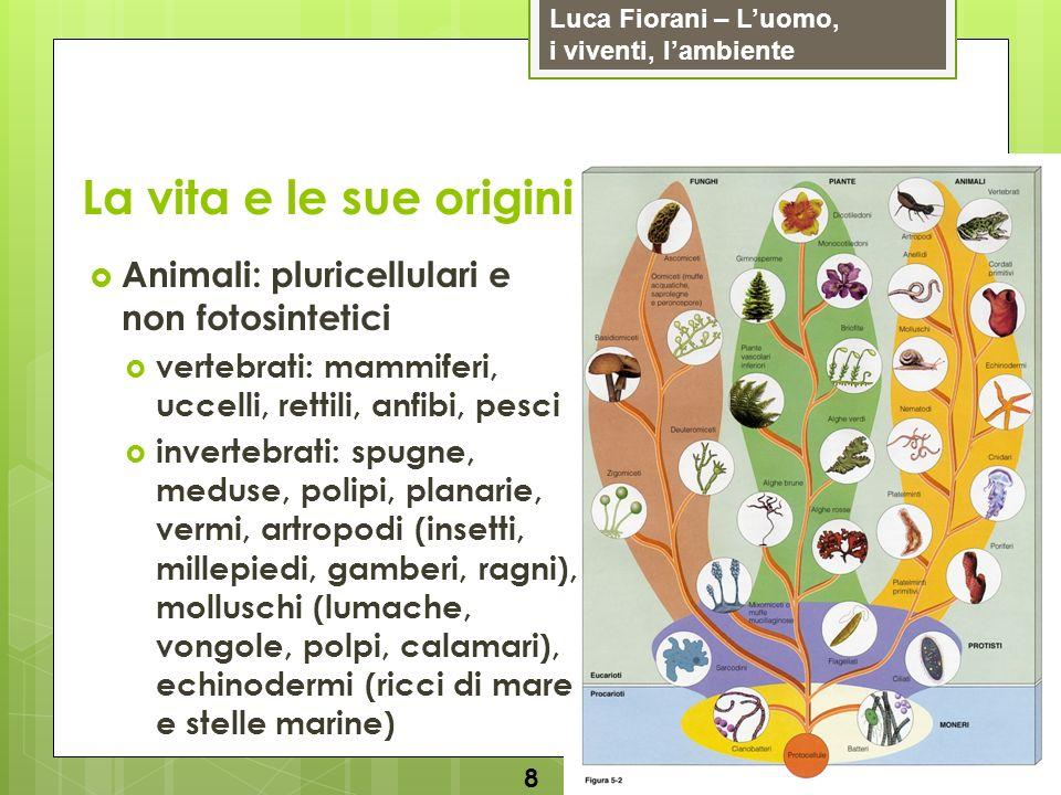 Luca Fiorani – Luomo, i viventi, lambiente La vita e le sue origini 8 Animali: pluricellulari e non fotosintetici vertebrati: mammiferi, uccelli, rett