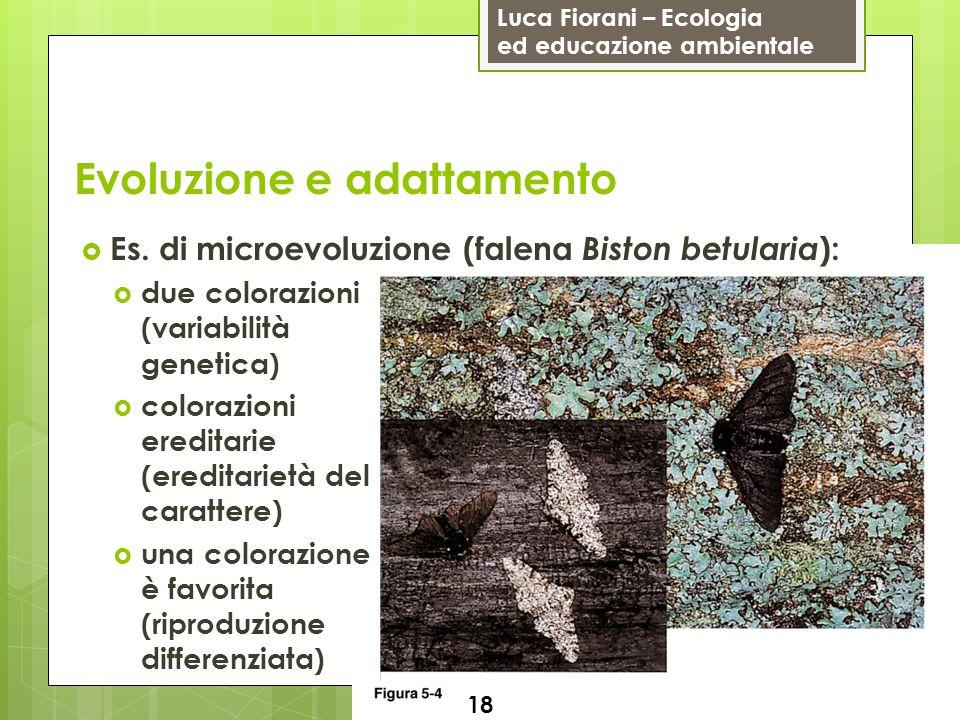 Luca Fiorani – Ecologia ed educazione ambientale Evoluzione e adattamento 18 Es. di microevoluzione (falena Biston betularia ): due colorazioni (varia