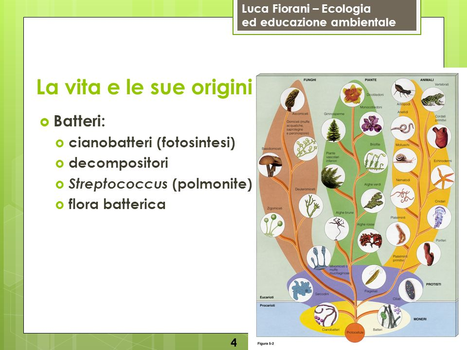 Luca Fiorani – Ecologia ed educazione ambientale La vita e le sue origini 4 Batteri: cianobatteri (fotosintesi) decompositori Streptococcus (polmonite
