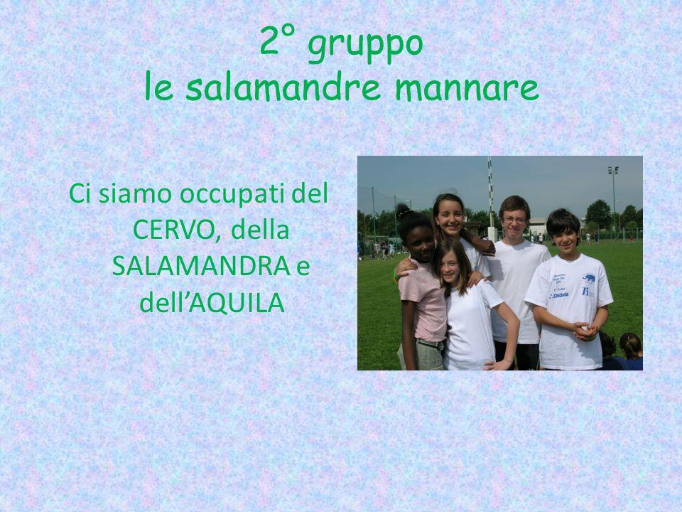 2° gruppo le salamandre mannare Ci siamo occupati del CERVO, della SALAMANDRA e dellAQUILA